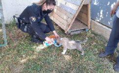 Sokakta buldukları yavru köpeği sahiplendiler
