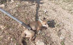 15 metrelik kuyuya düşen yavru tilki özel aparat ile kurtarıldı