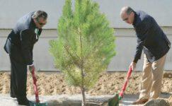 Çölleşmeyle mücadelenin en önemli unsuru ağaçlandırmadır