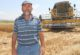Buğday hasadı beklentiyi karşılamadı