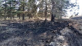 Fabrika bahçesinde çıkan yangında çam ağaçları zarar gördü