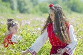 Gül çiçeği kilogram fiyatı 7,80 lira olarak açıklandı