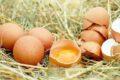 Tavuk yumurtası üretiminde artış